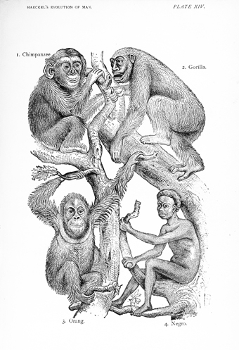 Ernst Haeckel's Depiction of Black People